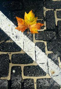 Lone-Autumn-Leaf-Liz-Miller